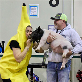 SHE admin kiss a pig while dressed as bananas